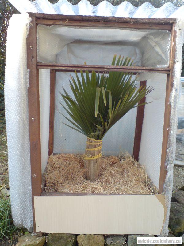 mein winterschutz winterschutz palmen exotenfans forum. Black Bedroom Furniture Sets. Home Design Ideas